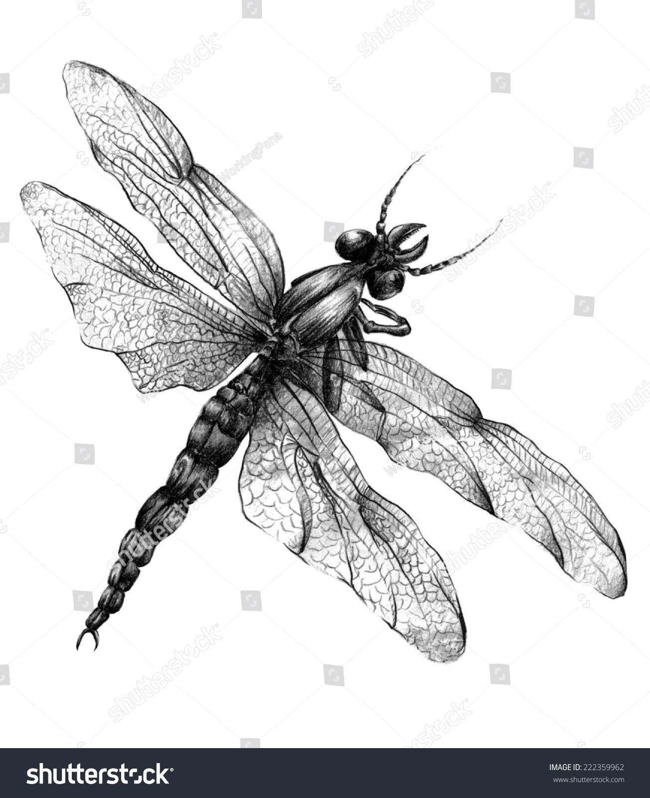 dragonflypencil drawingcharcoal black color stock illustration