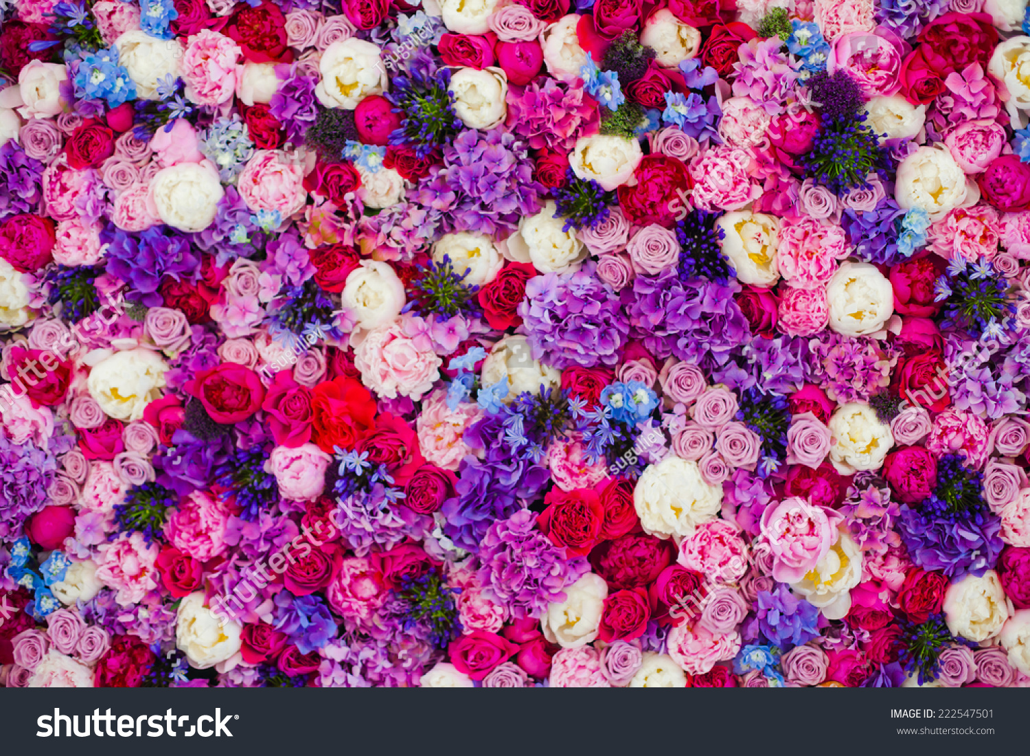 Beautiful wall made of red violet… Stock Photo 222547501 ...