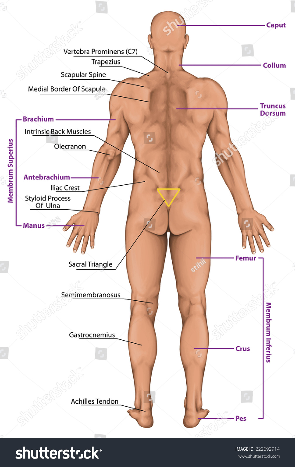 Parts Of Mans Body 52