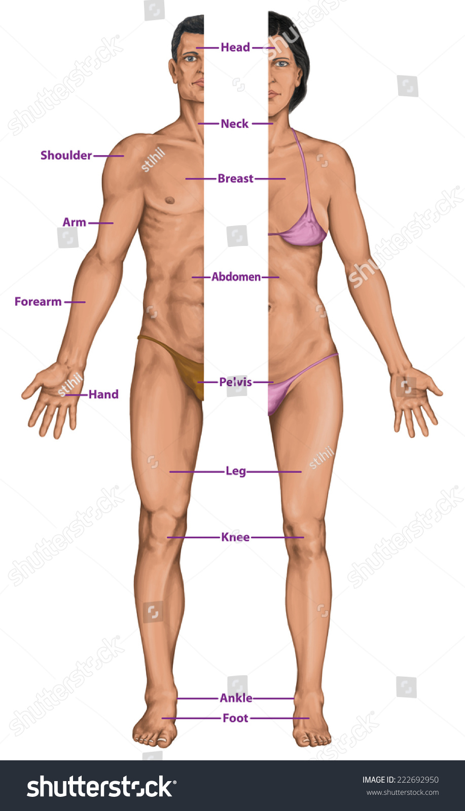 human male view female Anterior of and