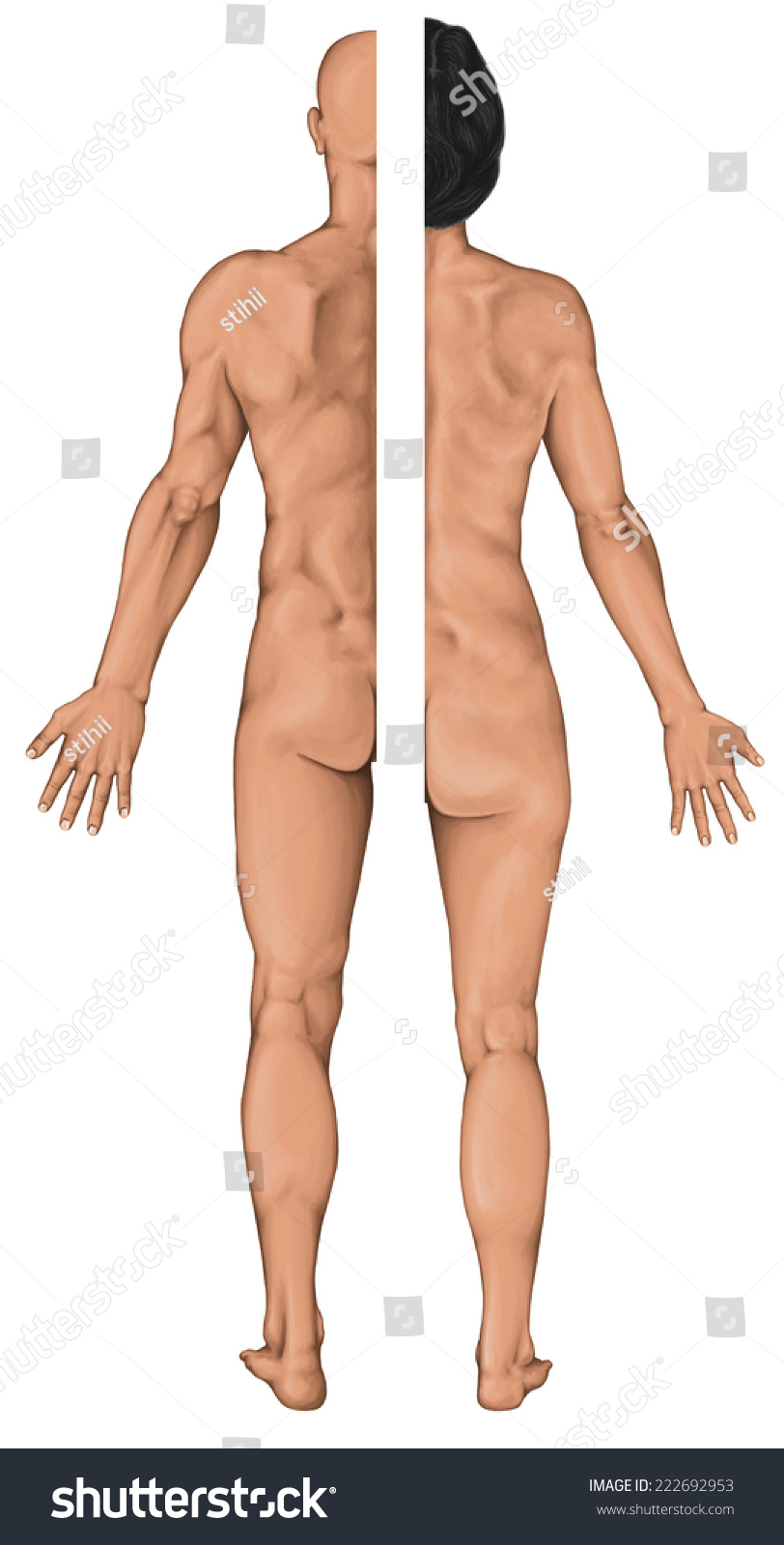 Male Female Anatomical Body Surface Anatomy Stock Illustration ...