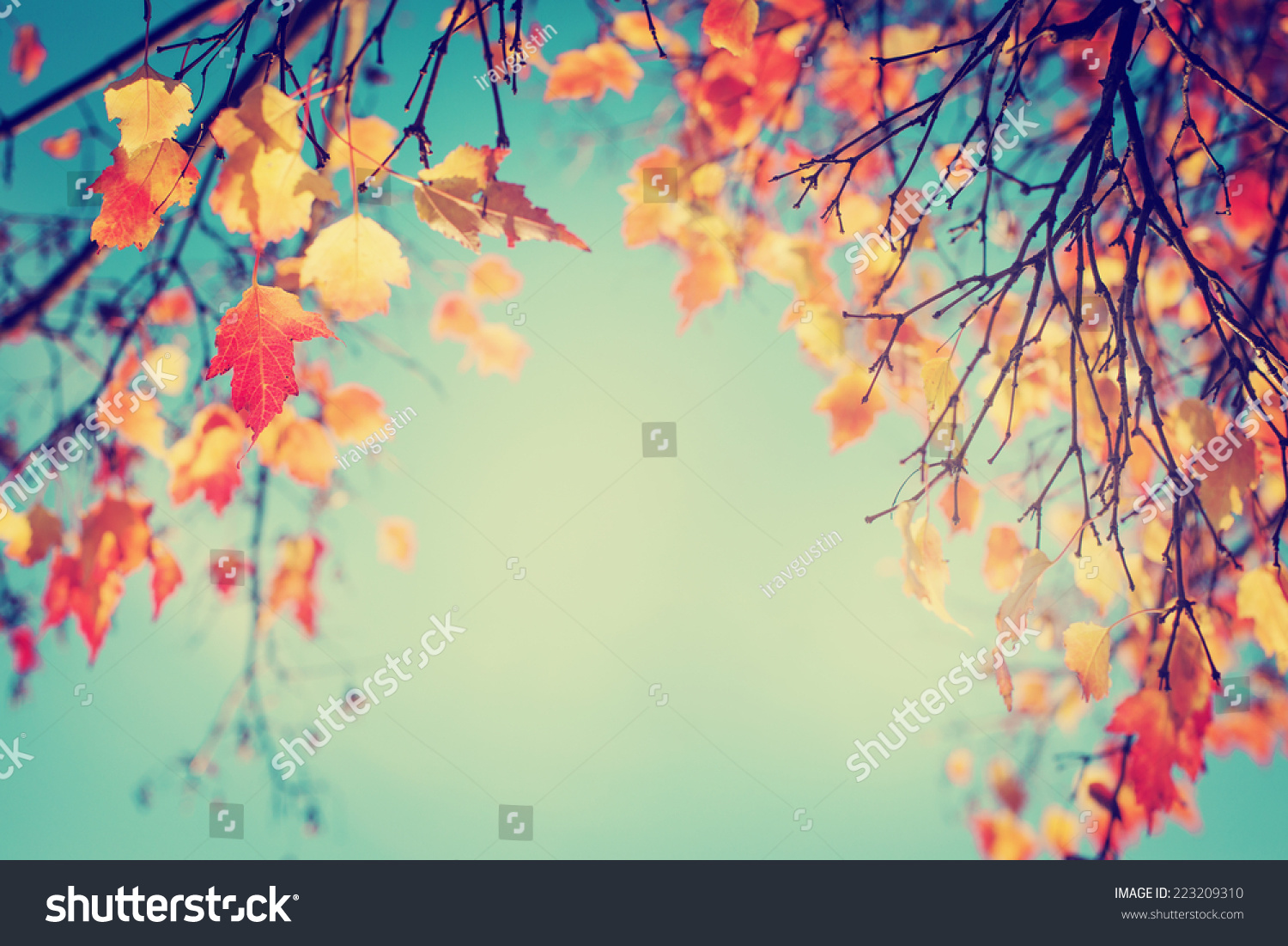 Colorful Foliage Autumn Park Autumn Leaves Stock Photo (Royalty Free ...