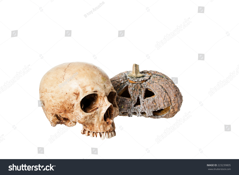 Human Skulls Pumpkin Carving Skulls Rotten Stock Photo (Edit Now