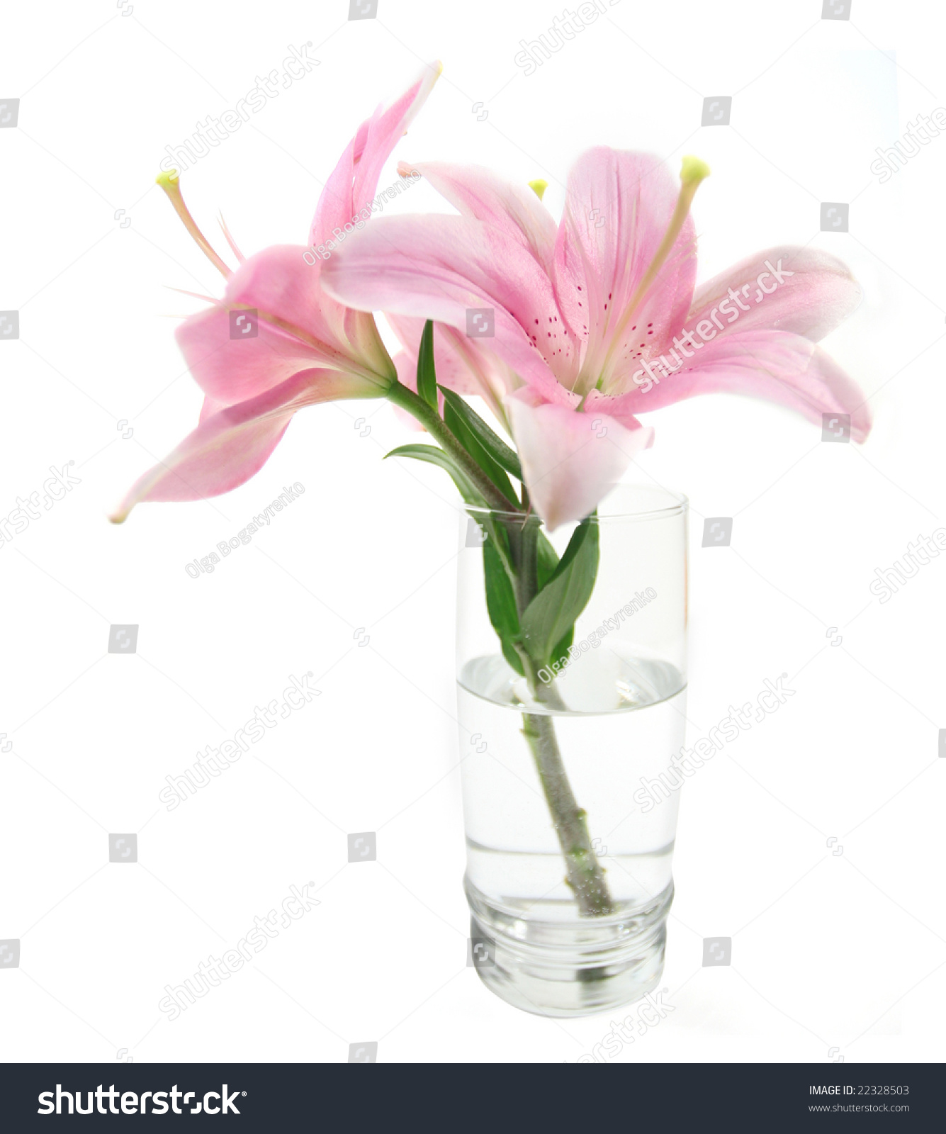 Tropical lily flower glass vase water stock photo edit now tropical lily flower in a glass or vase in water isolated over white background izmirmasajfo