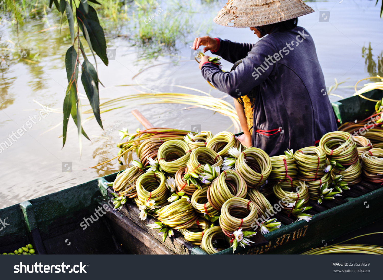 Water lily flowers nymphaea prepared roll stock photo 100 legal water lily flowers nymphaea prepared in roll for sale this is used vegetables izmirmasajfo