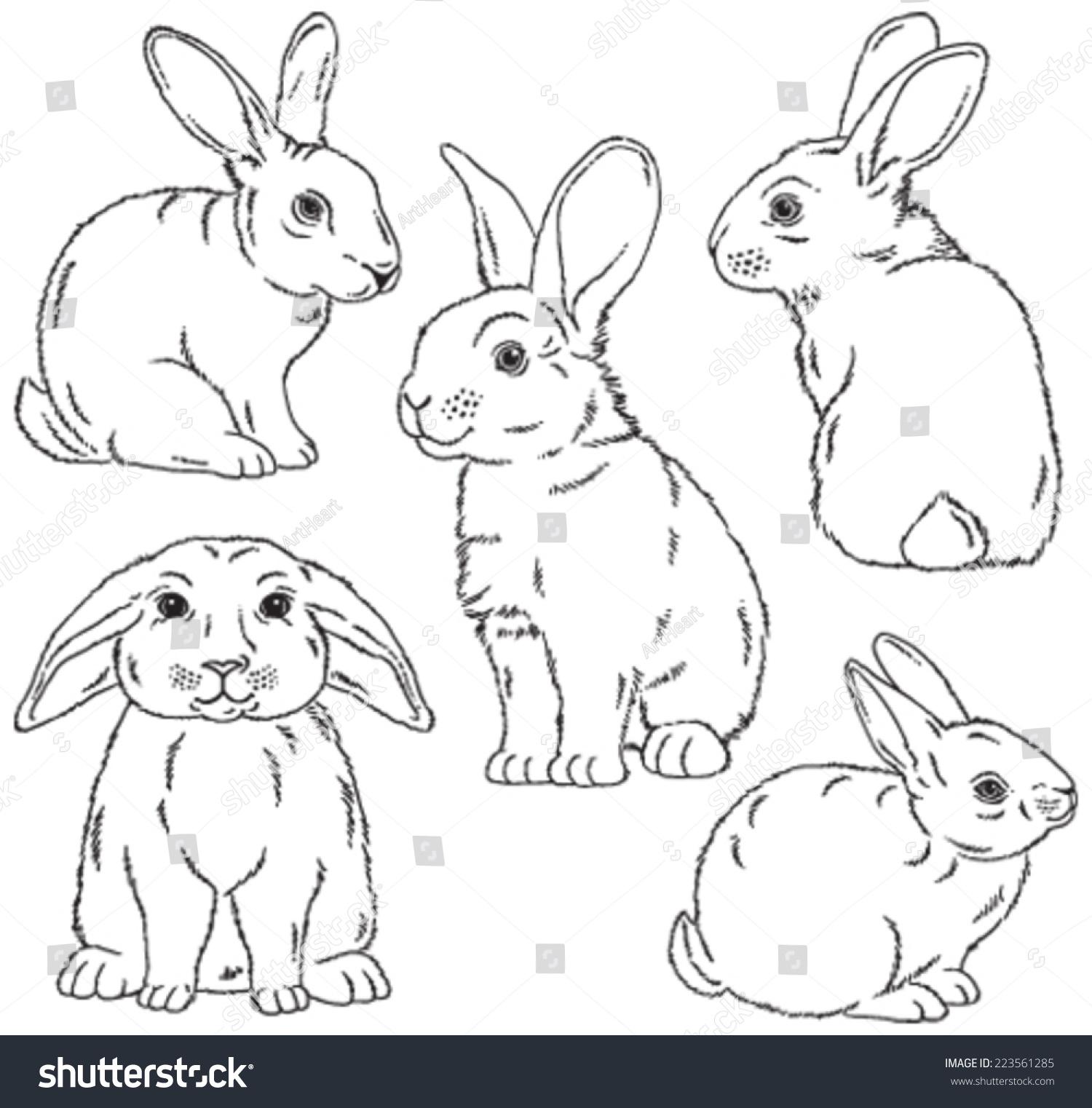 five black white sketches cute rabbits stock vector 223561285