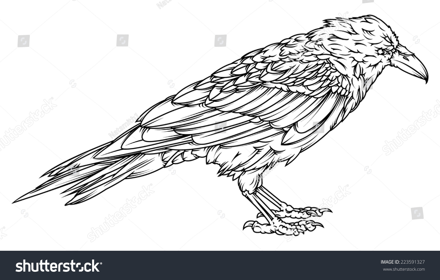 Line Drawing Raven : Vector drawing raven outline easy edit stock