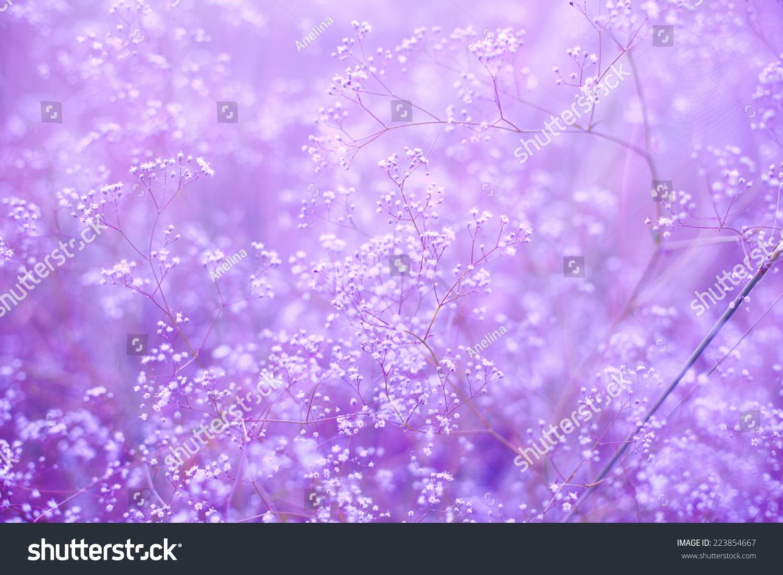 purple wallpaper small - photo #35