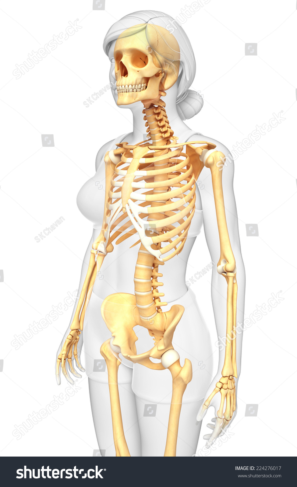 Illustration Human Skeleton Side View Stock Illustration 224276017
