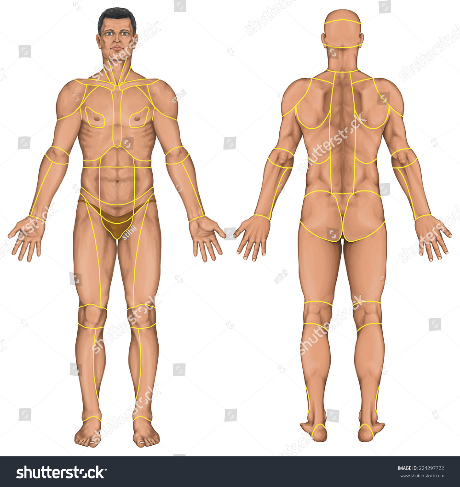 Royalty Free Stock Illustration of Region Human Body Regions ...
