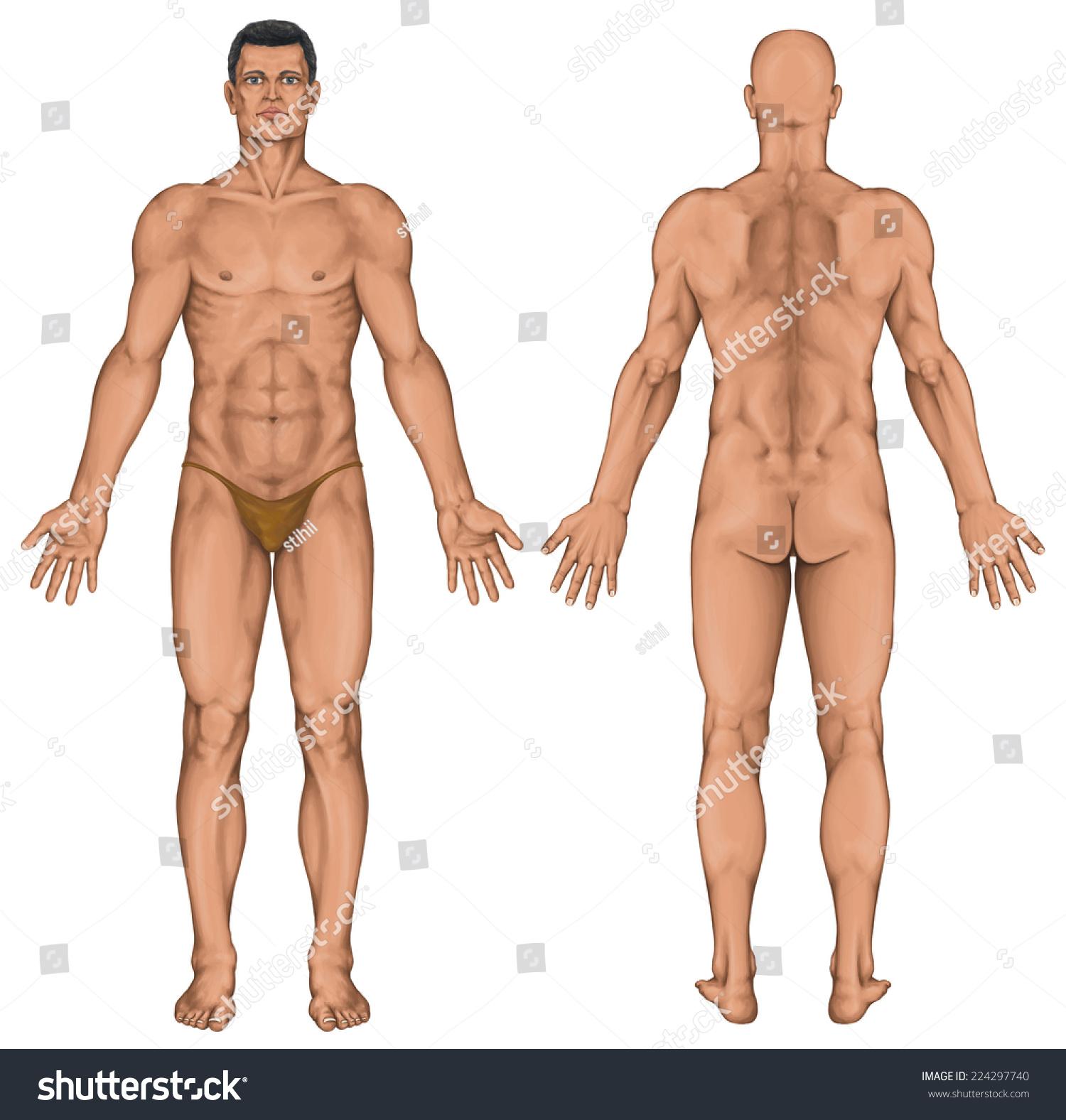 male anatomical body surface anatomy human stock illustration, Human Body
