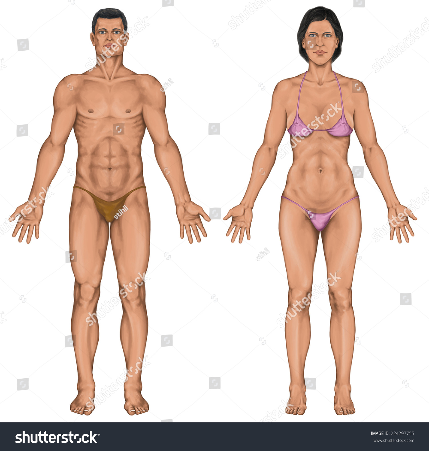 Male Female Anatomical Body Surface Anatomy Stock Illustration