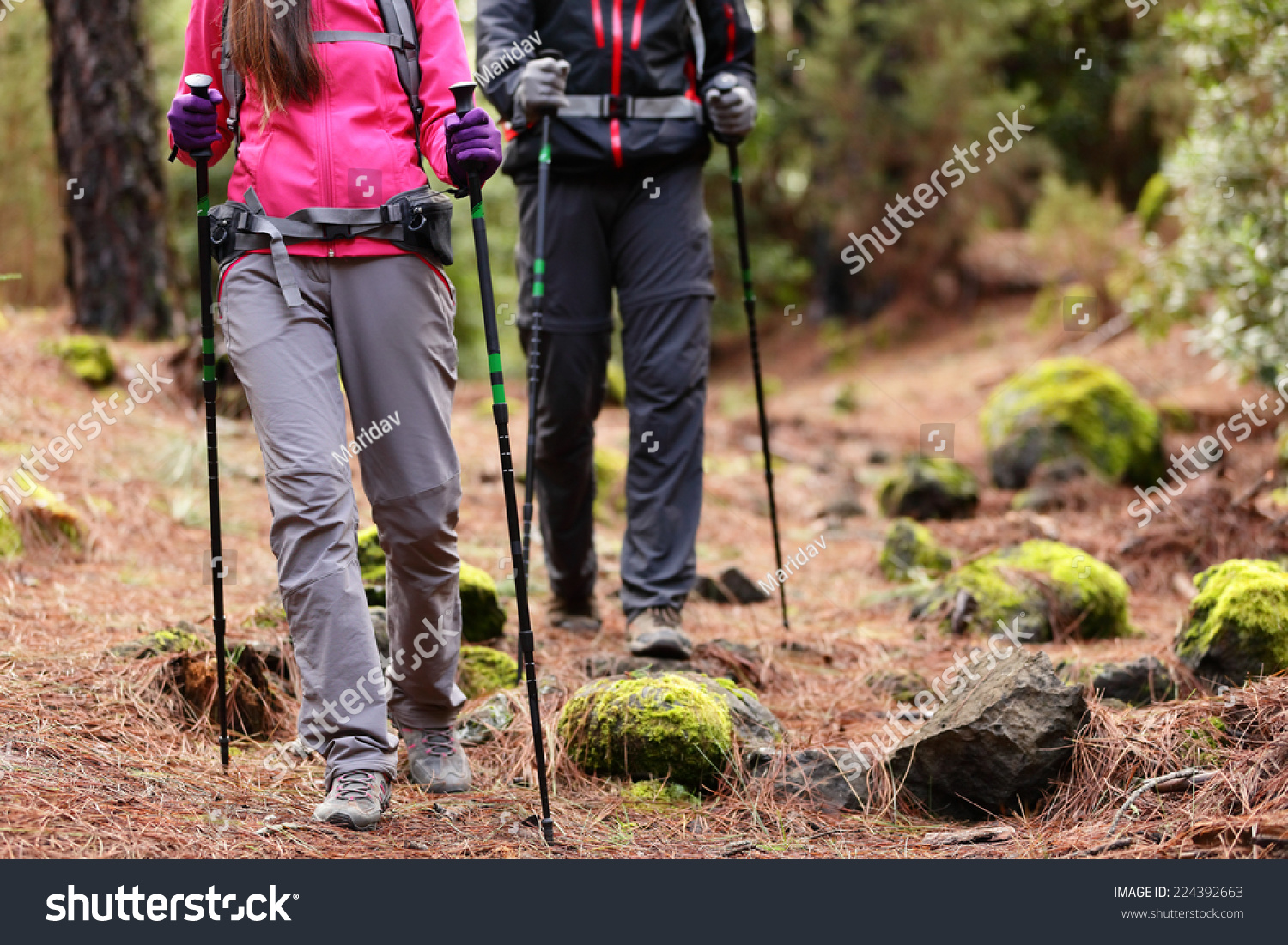 Hiking Hikers Walking Forest Poles On Stock Photo