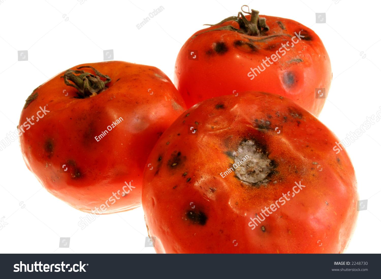 Rotten tomato movie critics
