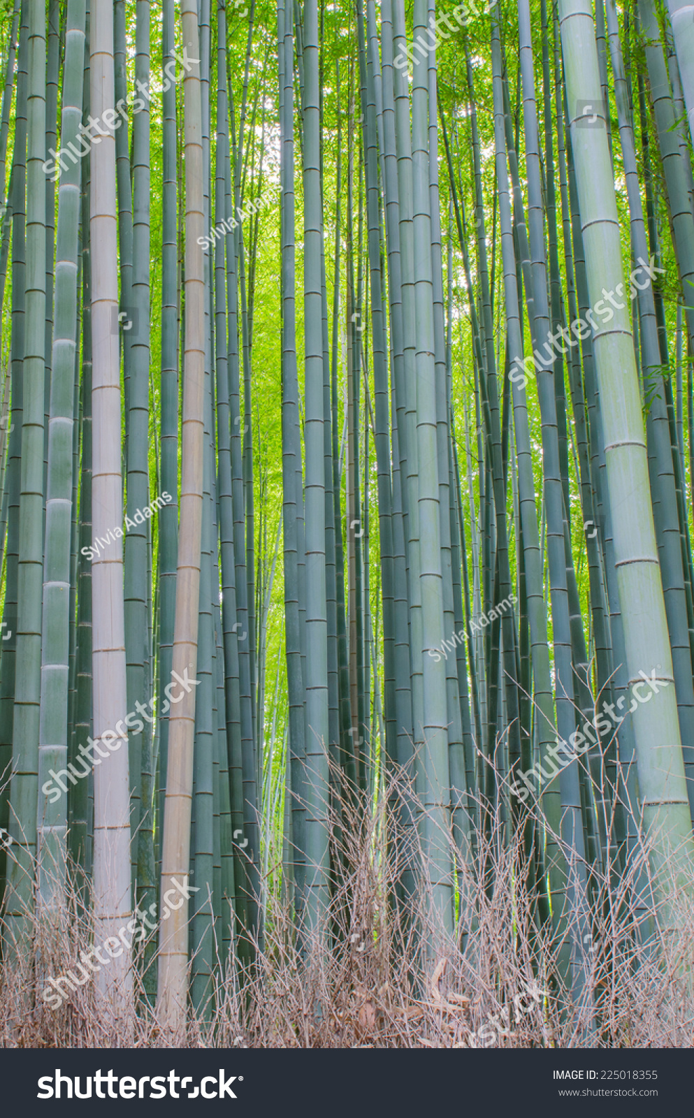 in a bamboo grove creative re write Facebookcom bamboo grove creative, mckinney, texas 612 likes 1 talking about this 23 were here complete creative immersion in every task we're given.