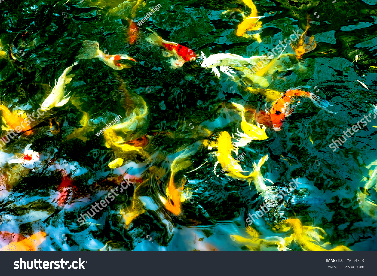 Koi Fish Dark Pondcolorful Natural Background Stock Photo (Royalty ...