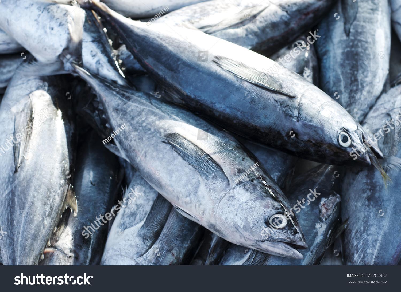 Eastern little tuna - photo#19