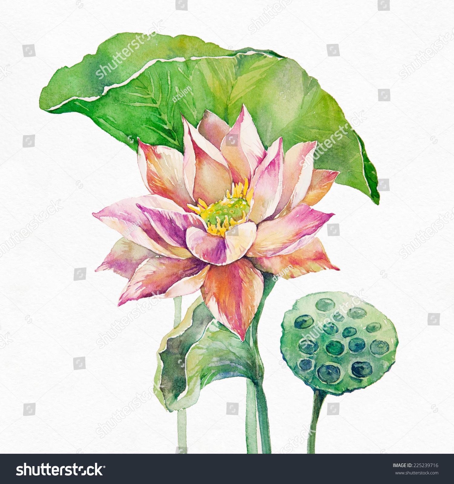 Lotus Flower Seed Pod Watercolor Illustration Stock Illustration