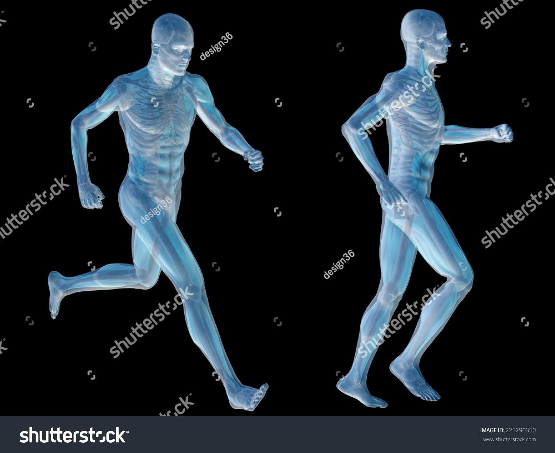 3 D Human Man Muscles Skeleton Anatomy Stock Illustration 225290350