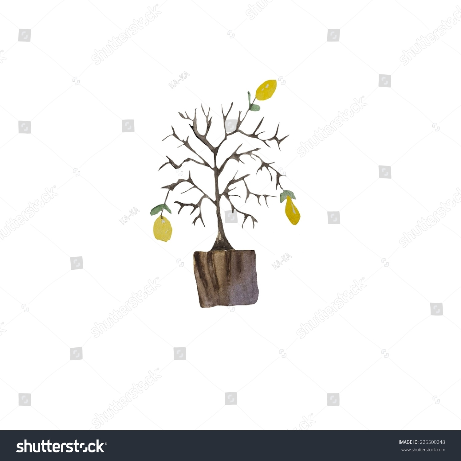 hand paint watercolor lemon tree pot stock illustration 225500248