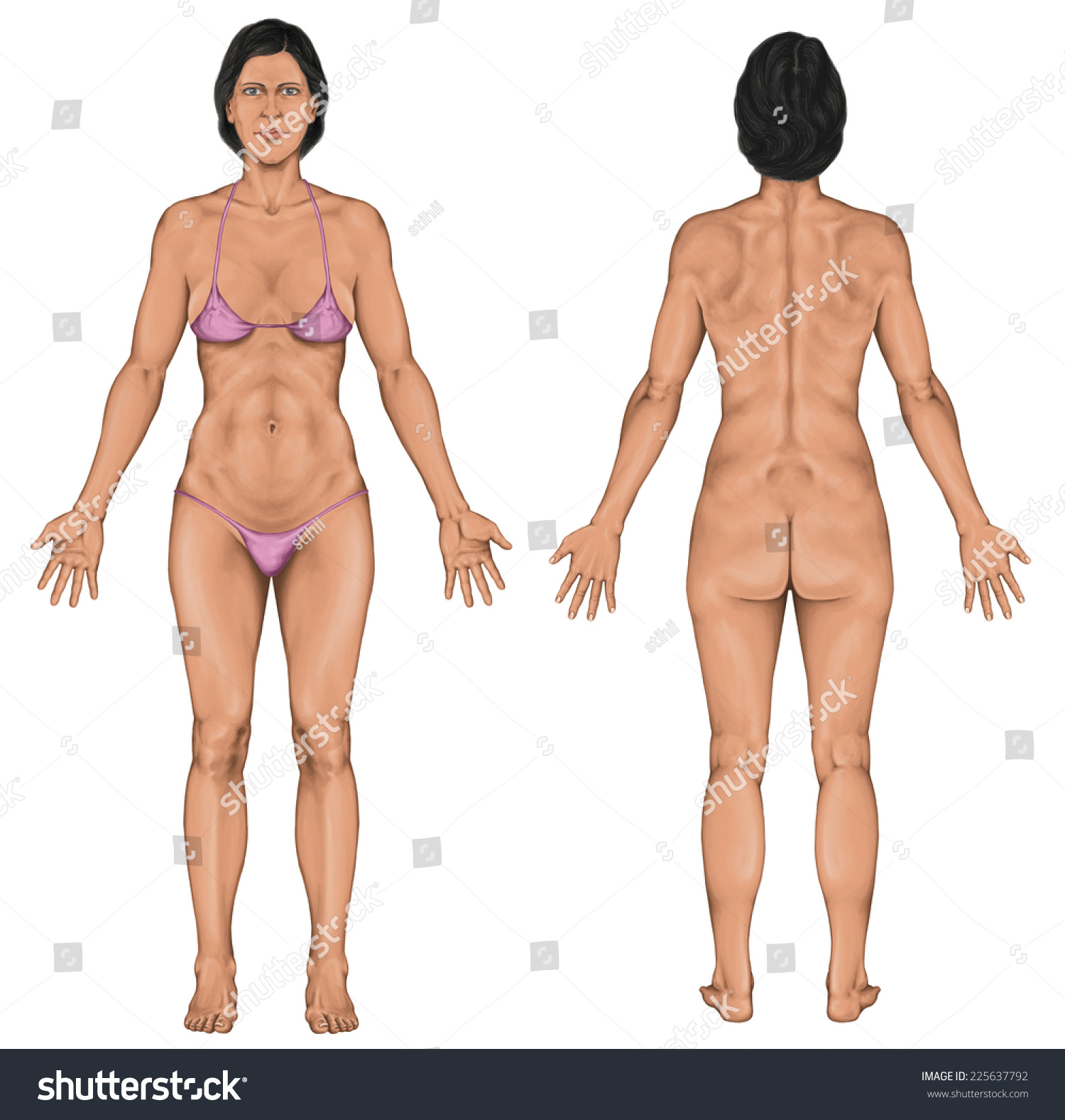 Woman Women Female Anatomical Body Surface Stock Illustration