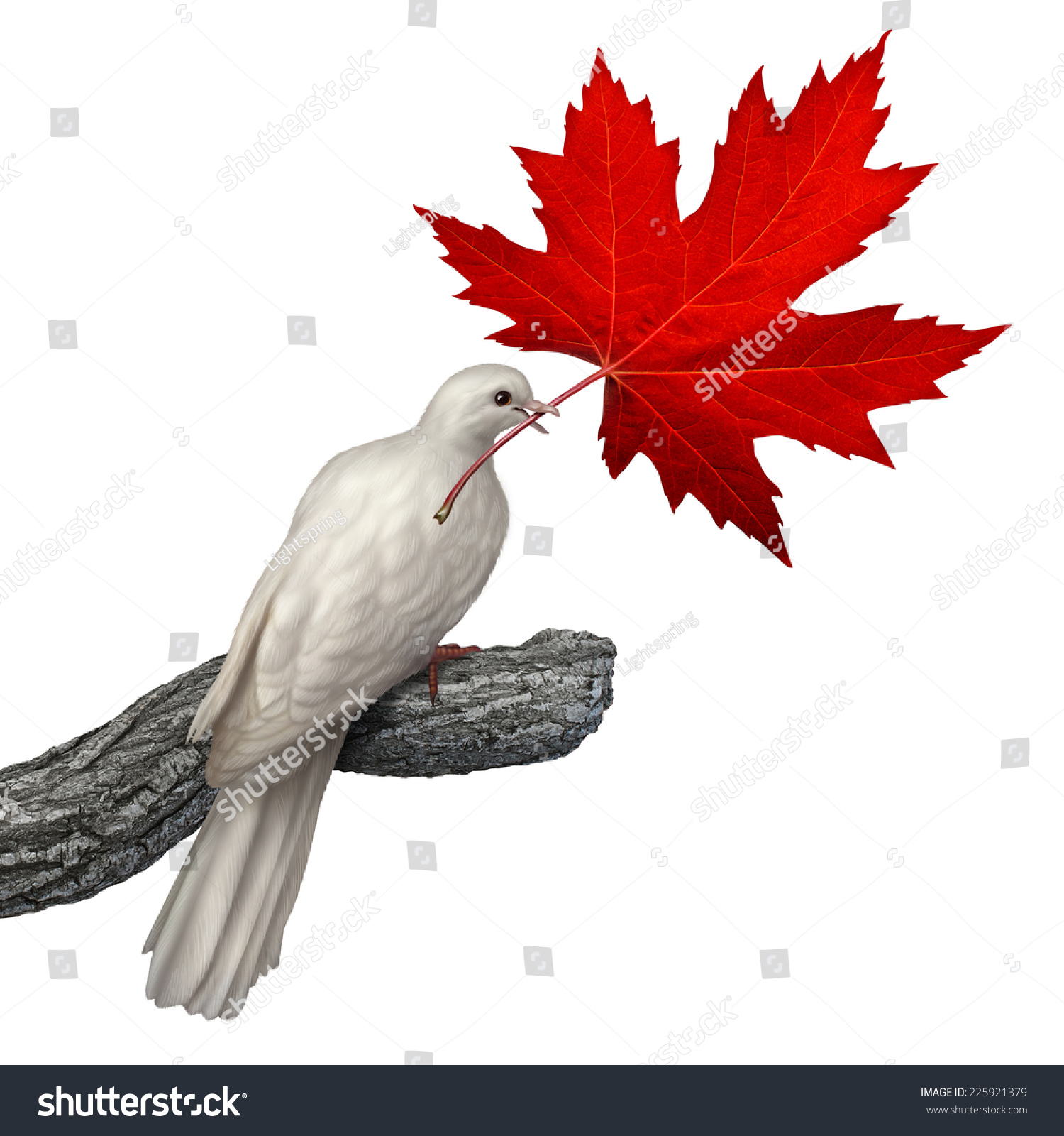 Canada peace concept white dove holding stock illustration canada peace concept as a white dove holding a red maple leaf on a white background biocorpaavc Choice Image