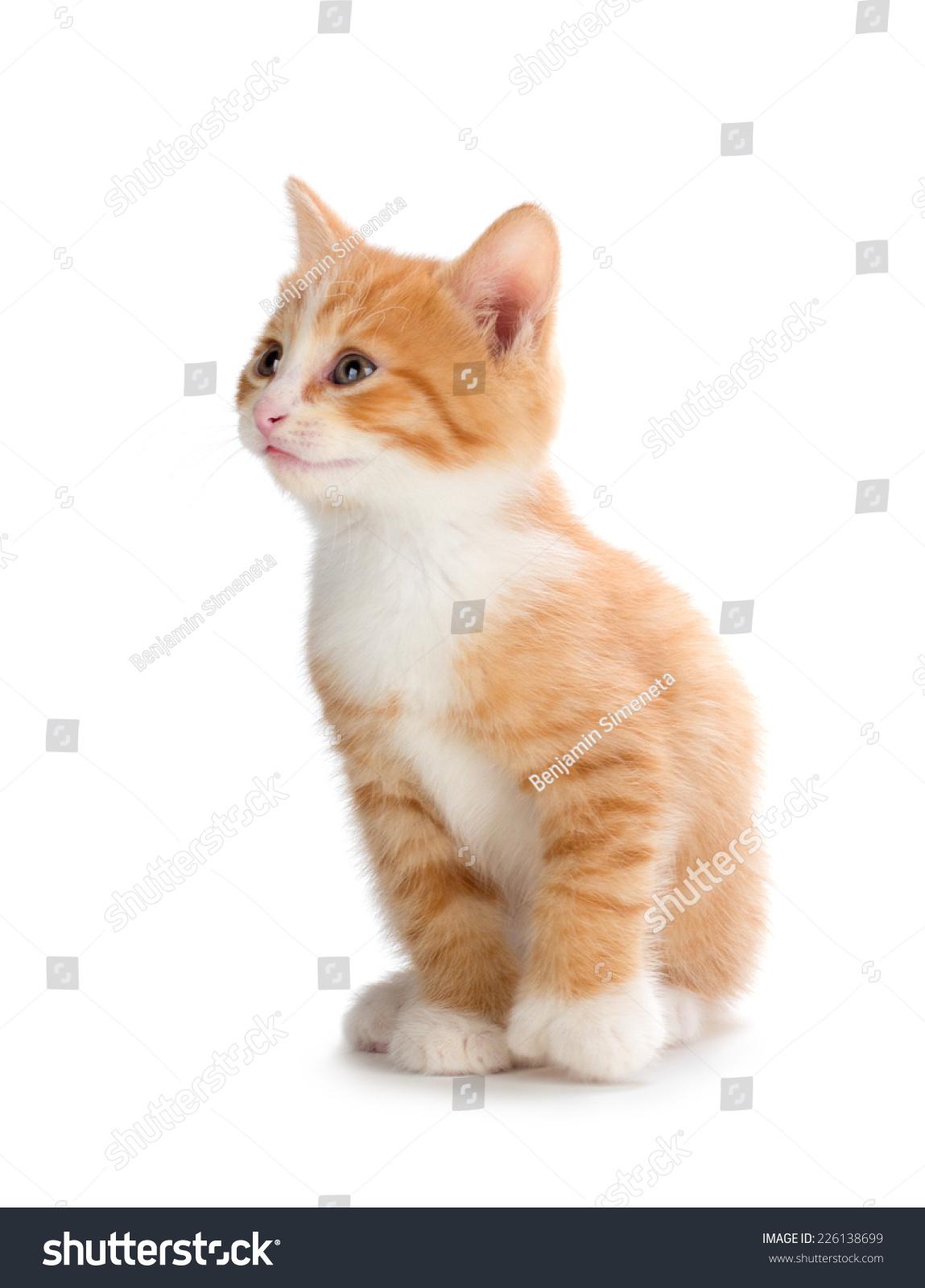 Cute Orange Kitten Looking Isolated Stock