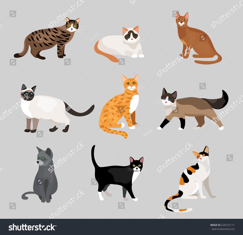 tri coloured cat