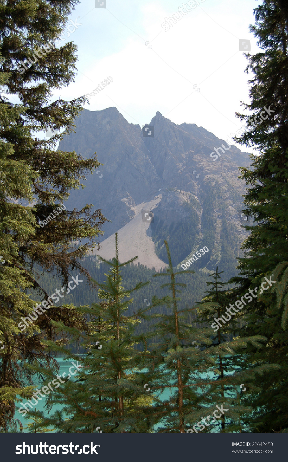 Lake Views Between The Trees In Canada Stock Photo