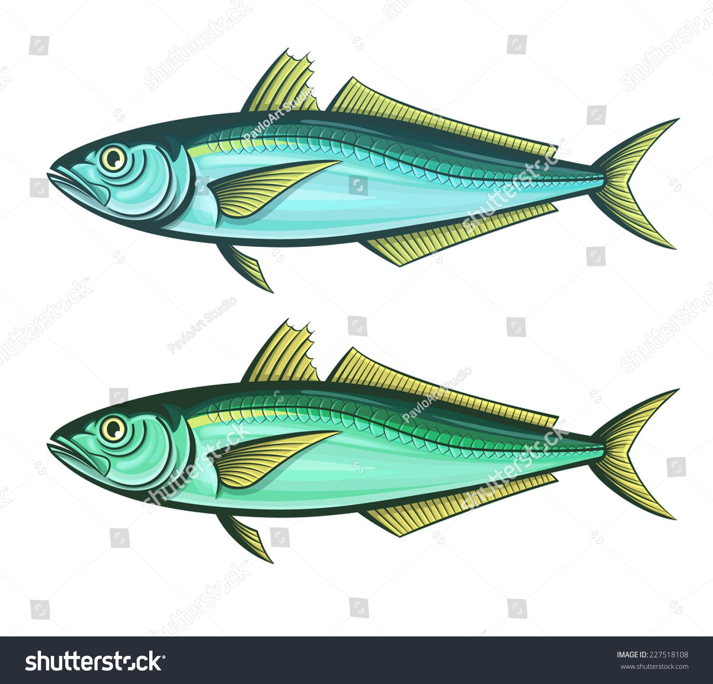 Scad Fish Color Engraving Vector Illustration Stock Vector 227518108 ...