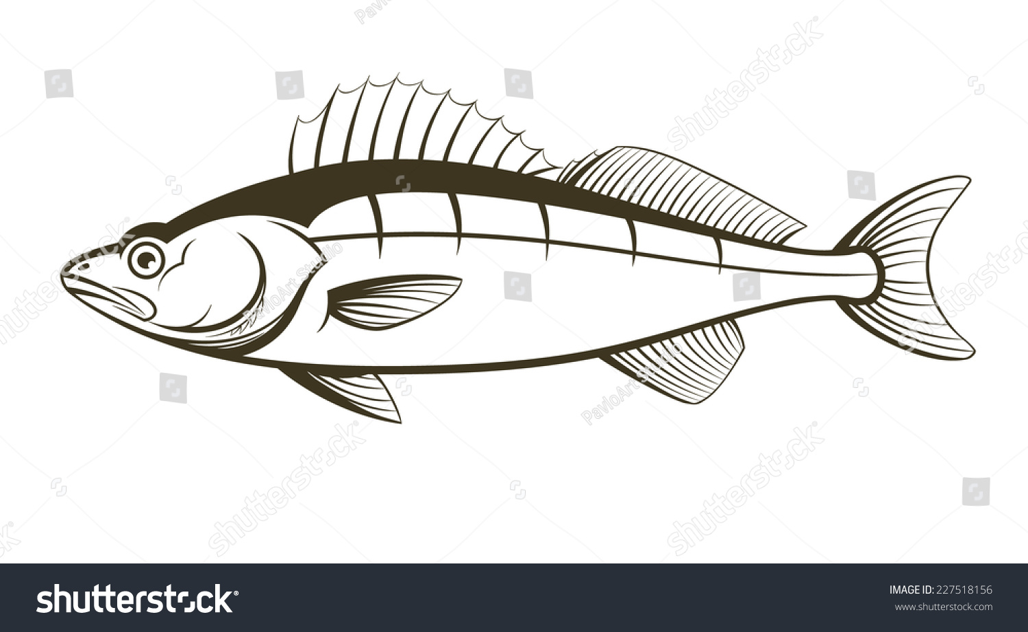 walleye fish outline engraving vector illustration stock