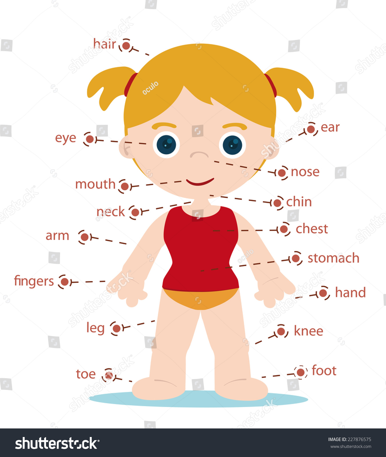 Free Worksheets music worksheets for preschoolers : Girl Body Parts Chart For School Stock Vector Illustration ...