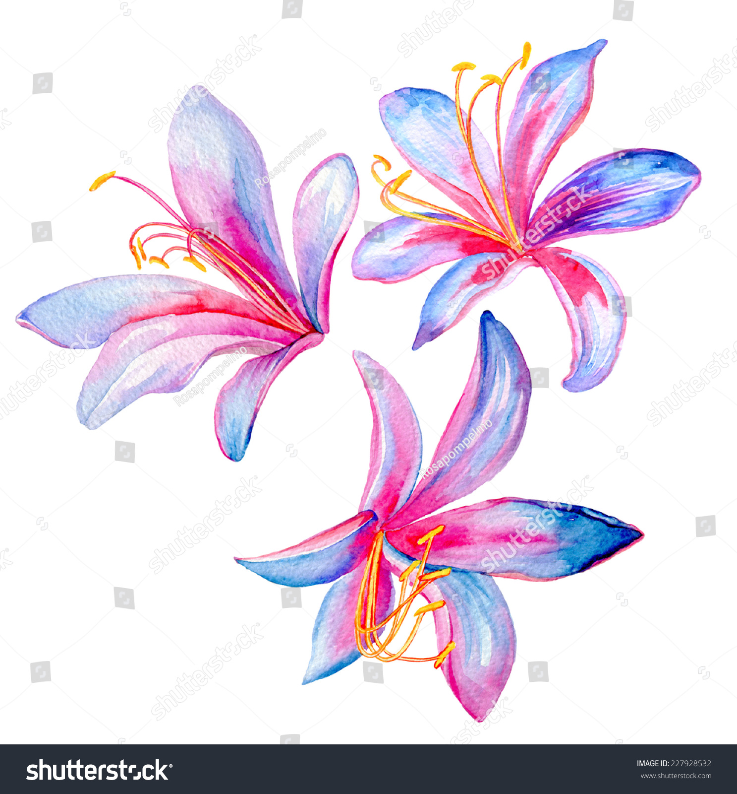 Exotic Lily Flowers Painting Watercolor Isolated Stock Illustration