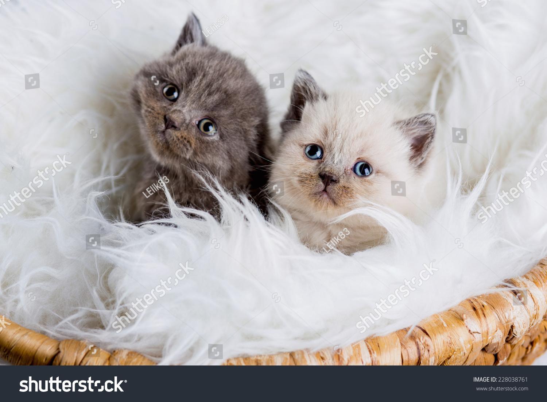 Cat Kitten Kitty Christmas Toy Gift Stock Photo (Edit Now) 228038761 ...