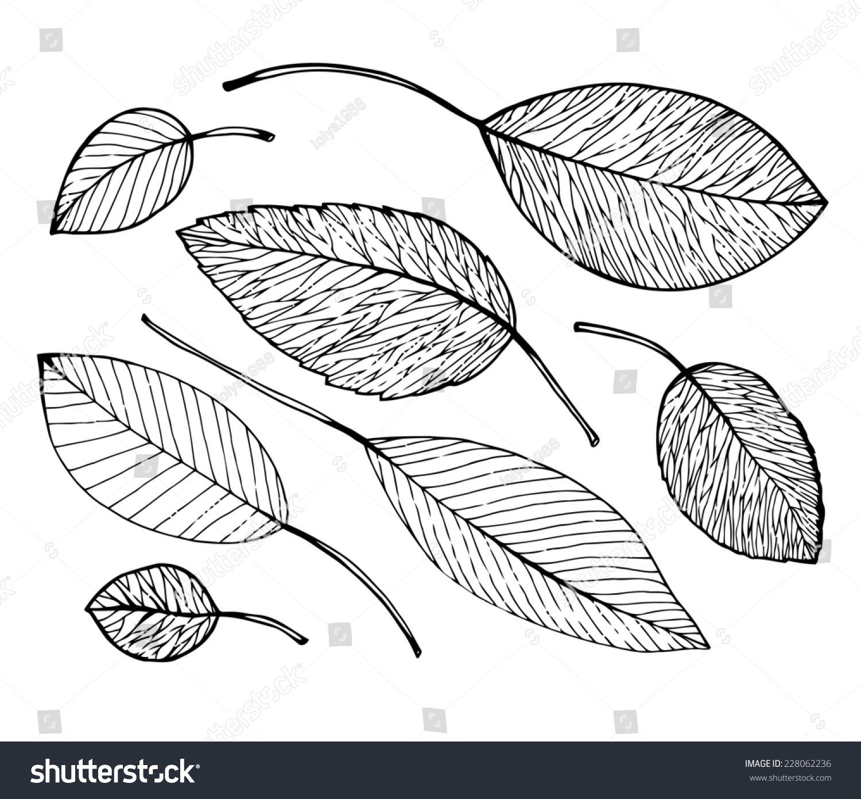 黑白素描与不同的树叶图片