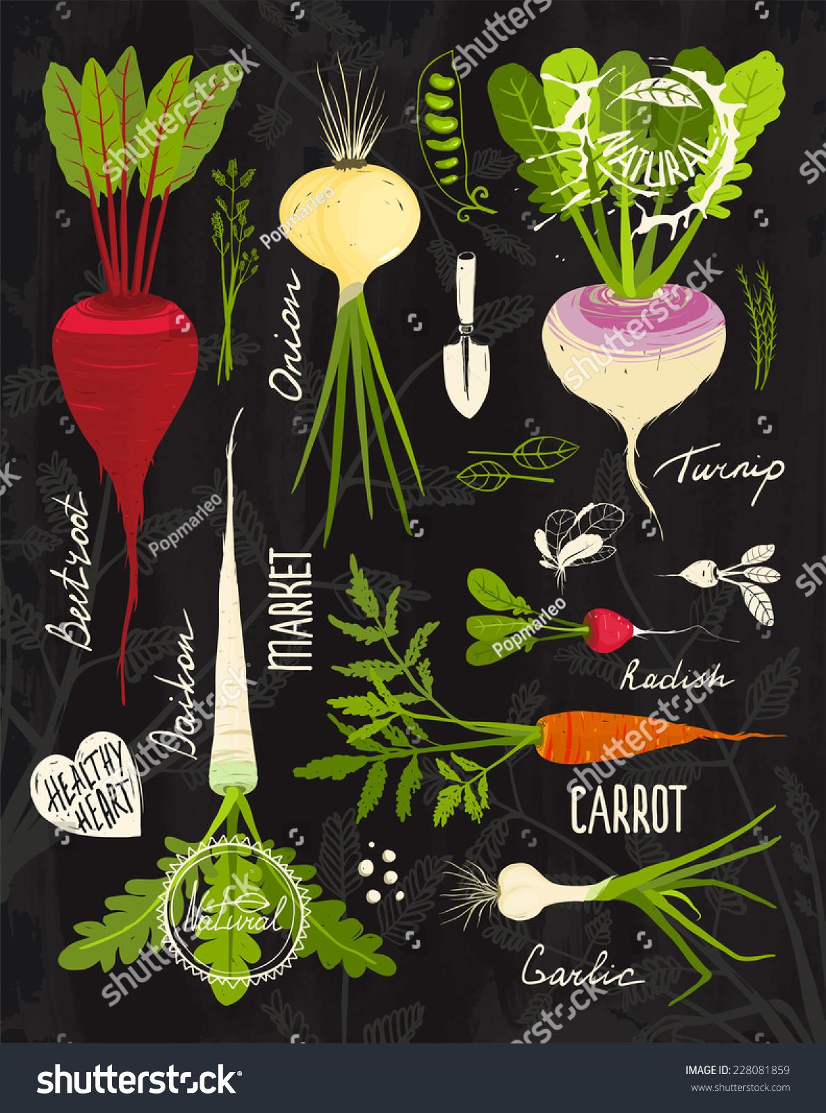 Root vegetables leafy tops set design stock vector for Vegetable design