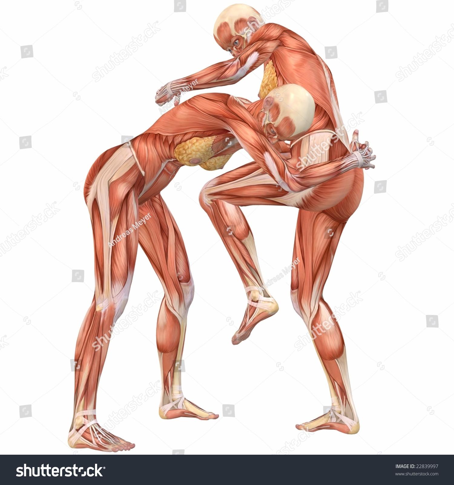Female Human Body Anatomy Street Fight Ez Canvas
