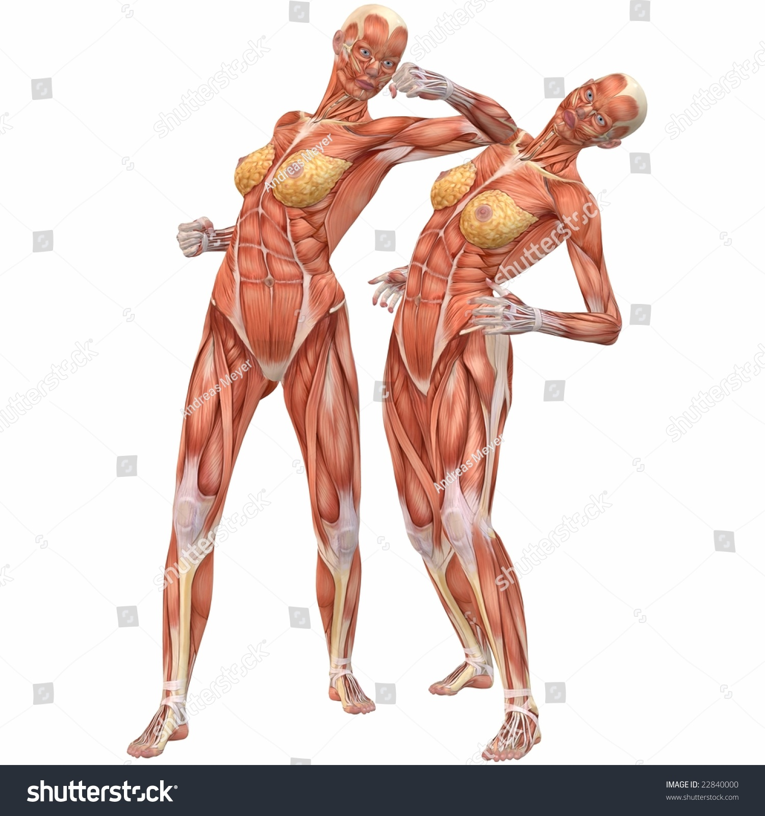 Female Human Body Anatomy Street Fight Stock Illustration 22840000