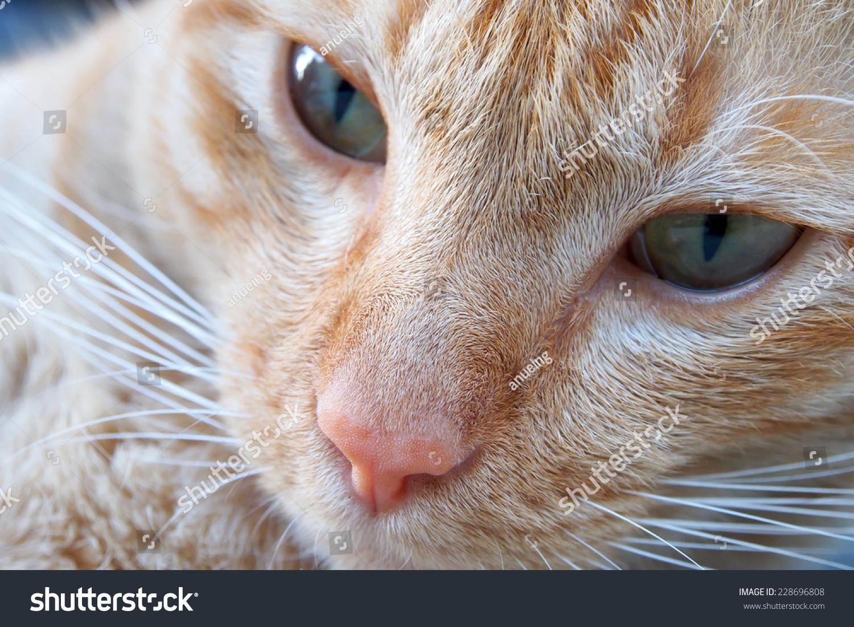 Cute Cat Face Close Stock Shutterstock