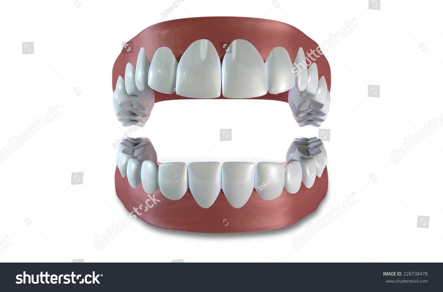 Separated Upper Lower Sets Human Teeth Stock Illustration 228738478