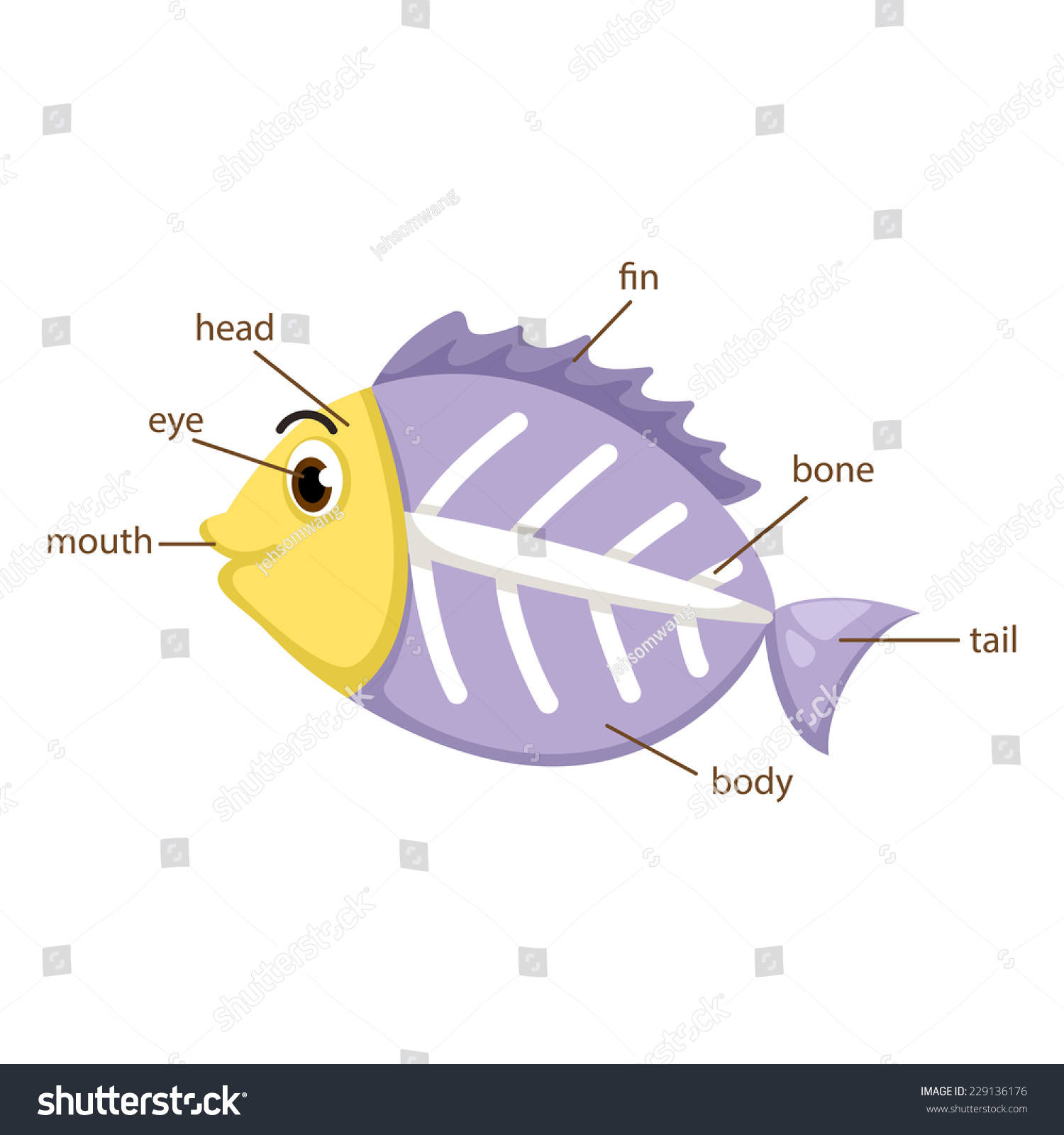 Illustration Xray Fish Vocabulary Part Body Stock Vector HD (Royalty ...