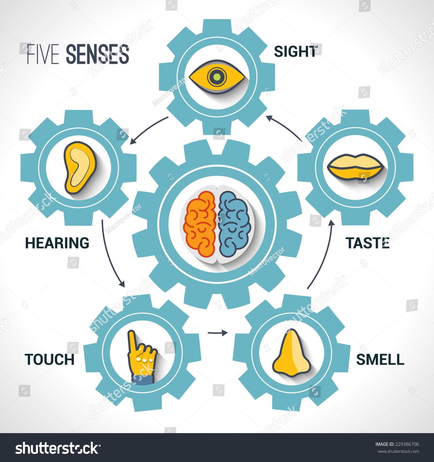 Five Senses Concept Human Organs Icons Stock Vector 229386706 ...