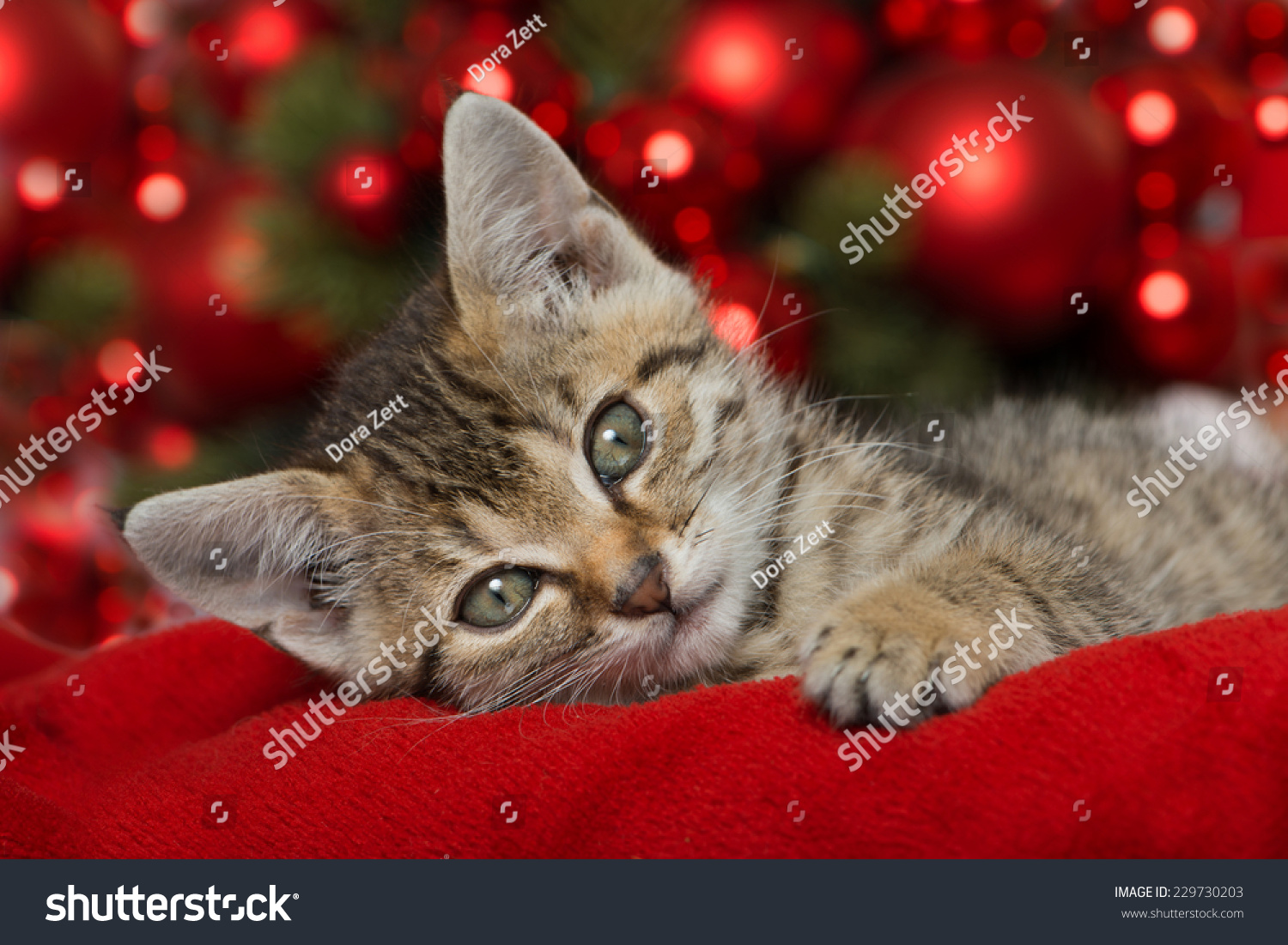 Christmas Kitten Red Christmas Decoration Stock Photo (Edit Now ...