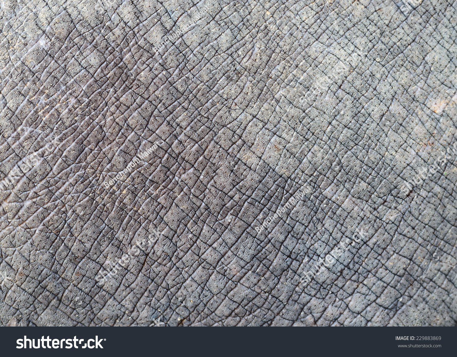 White Rhino Skin Texture Stock Photo 229883869 : Shutterstock