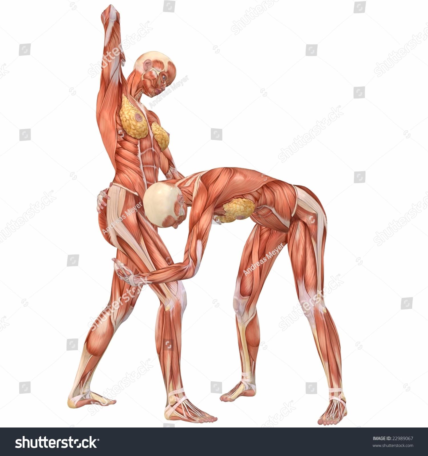Female Human Body Anatomy Street Fight Stock Illustration 22989067