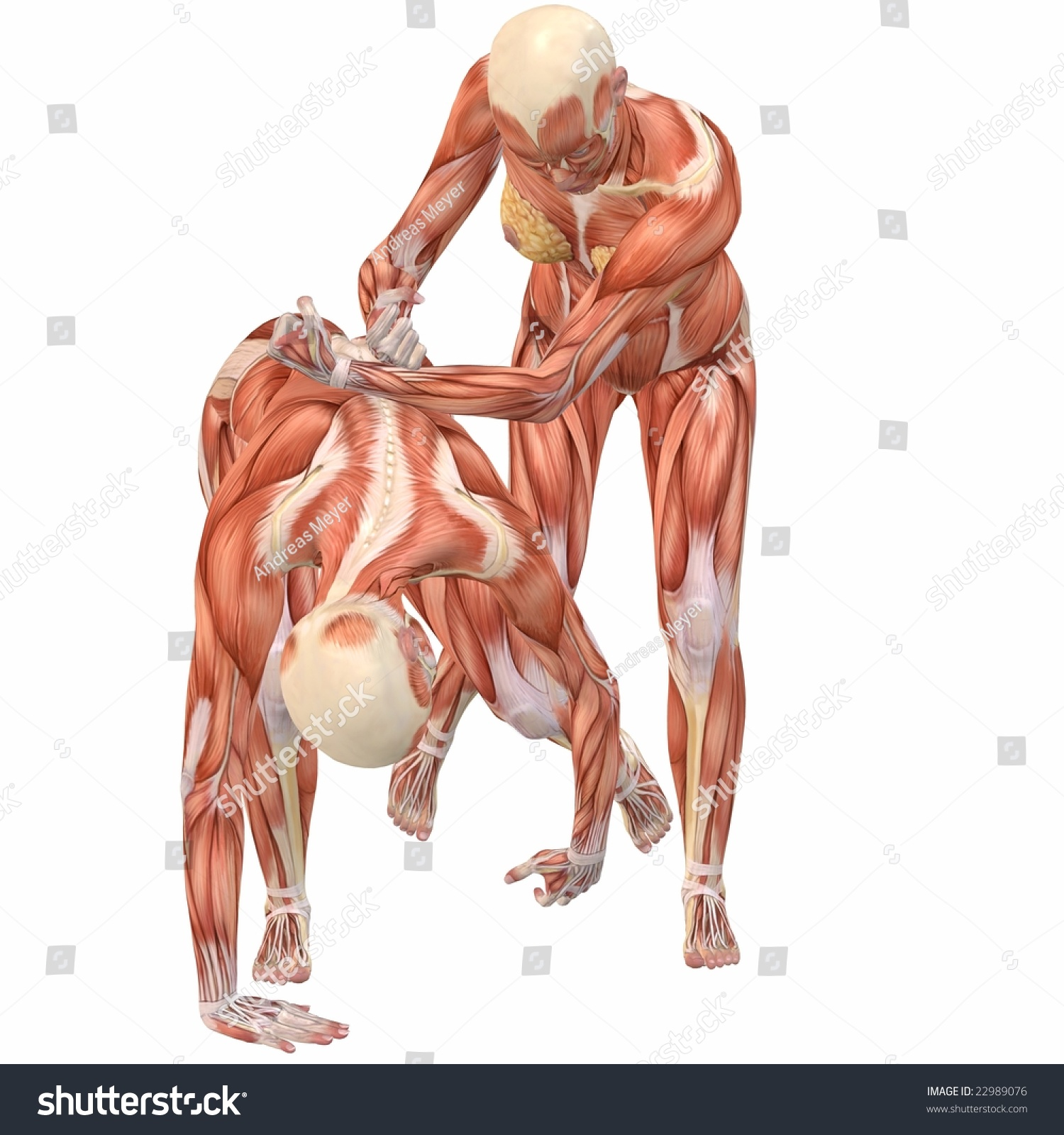 Female Human Body Anatomy Street Fight Stock Illustration - Royalty ...
