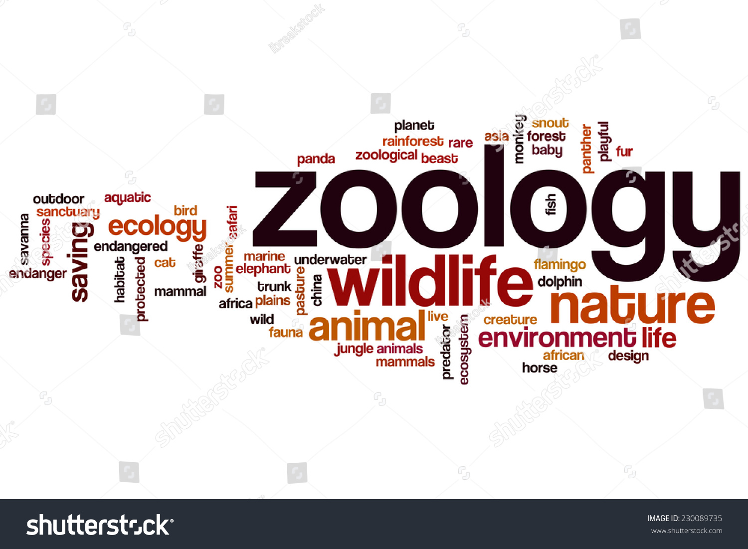 Zoology Word Cloud Concept Stock Illustration 230089735 ...