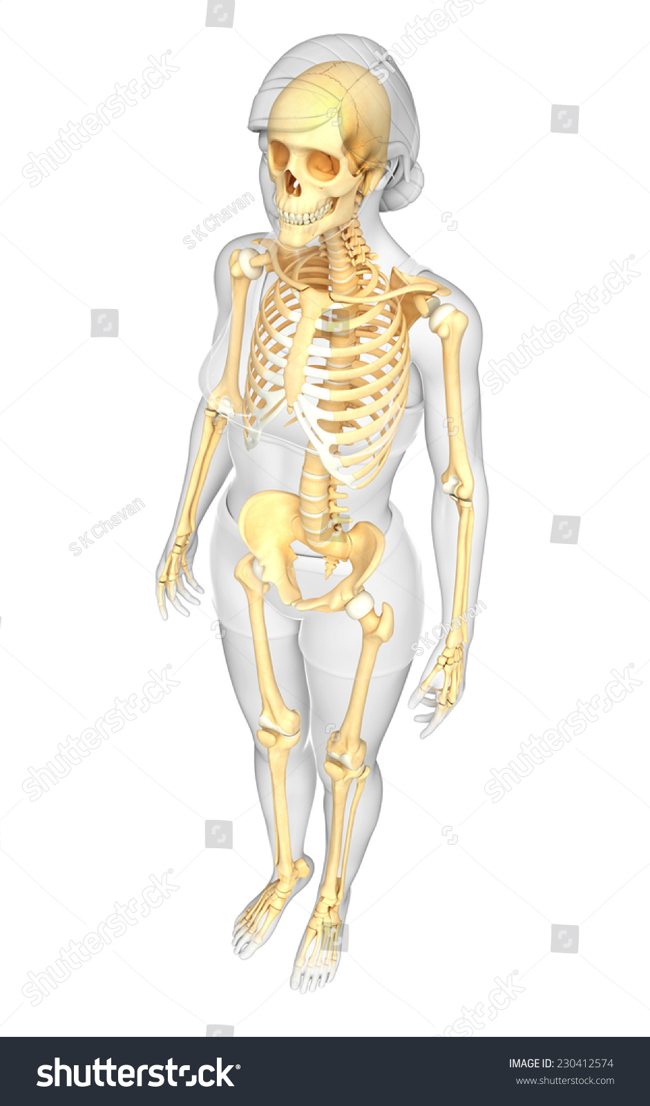 Royalty Free Stock Illustration Of Illustration Human Skeleton Side
