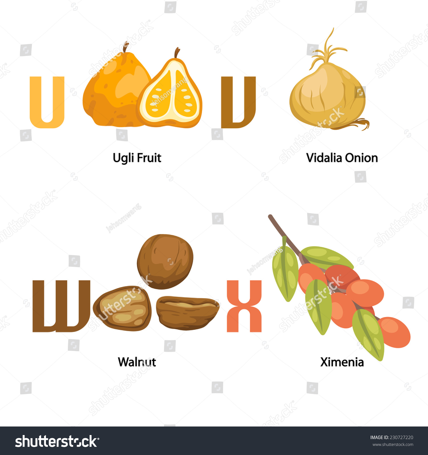 foods that start with the letter u what of food starts with the letter u food 21763 | stock vector alphabet u x letter ugli fruit vidalia onion walnut ximenia vector 230727220
