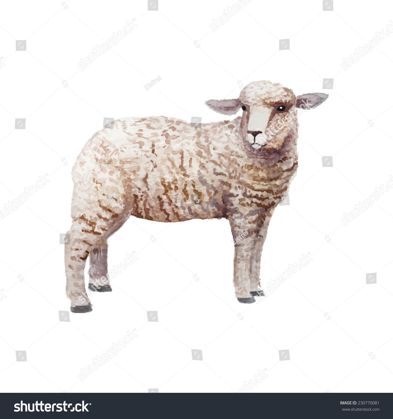 Vintage Sheep Illustration
